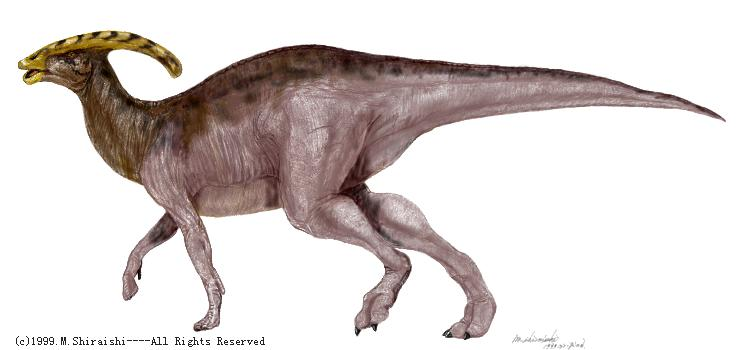 Parasaurolophus - illustration; Image ONLY