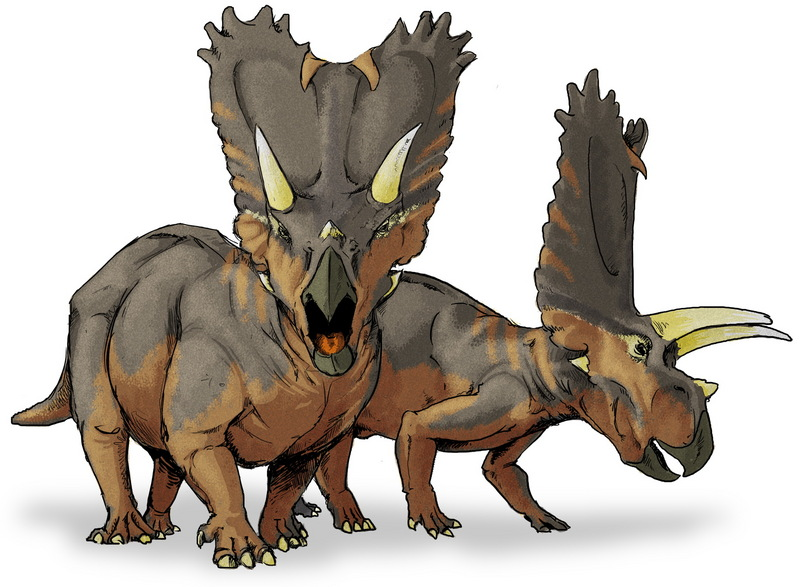 Pentaceratops - Wiki; DISPLAY FULL IMAGE.