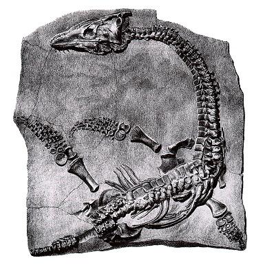 Plesiosaur anning.jpg