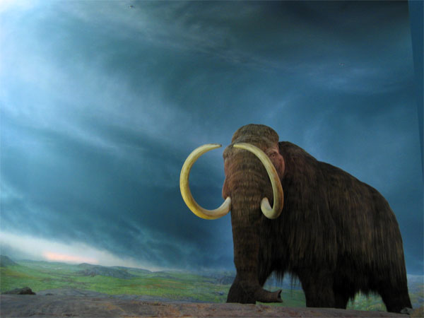 Woolly Mammoth (Mammuthus primigenius) - Wiki; Image ONLY