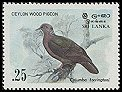 Sri Lanka Wood-pigeon (Columba torringtoni) - Wiki; Image ONLY