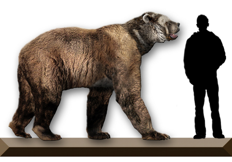 Short-faced Bear (Family: Ursidae, Genus: Arctodus) - Wiki; DISPLAY FULL IMAGE.