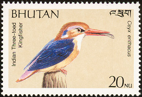 Black-backed Kingfisher (Ceyx erithaca) - Wiki; Image ONLY