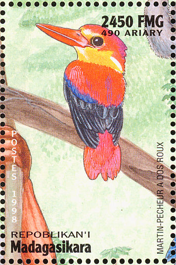 Rufous-backed Kingfisher (Ceyx rufidorsa) - Wiki; Image ONLY