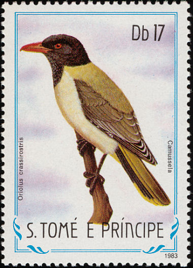 Great-billed Oriole (Oriolus crassirostris) - Wiki; Image ONLY
