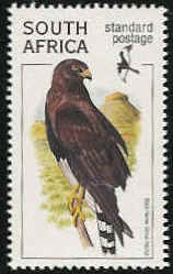 Black Harrier (Circus maurus) - Wiki; Image ONLY