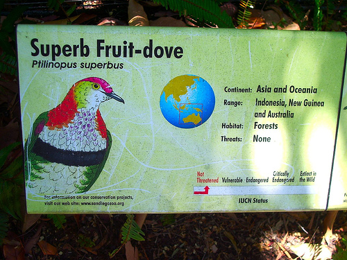 Superb Fruit-dove (Ptilinopus superbus) sign; Image ONLY