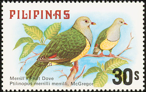 Cream-bellied Fruit-dove (Ptilinopus merrilli) - Wiki; Image ONLY