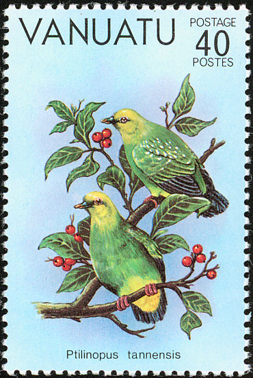 van198104l-Tanna Fruit-dove (Ptilinopus tannensis).jpg