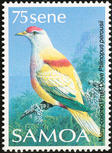 Many-coloured Fruit-dove (Ptilinopus perousii) - Wiki; Image ONLY