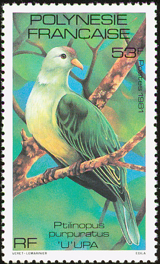Grey-green Fruit-dove (Ptilinopus purpuratus) - Wiki; Image ONLY