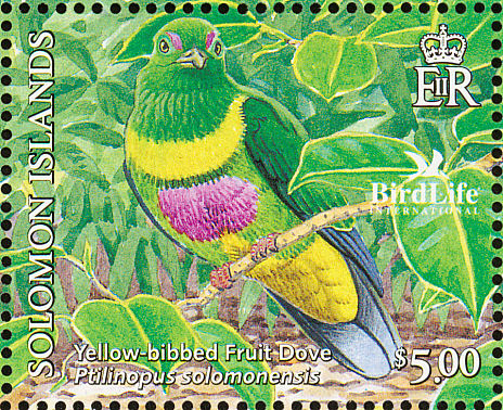 Yellow-bibbed Fruit-dove (Ptilinopus solomonensis) - Wiki; Image ONLY