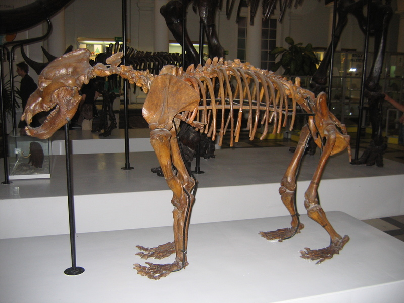 Cave Bear (Ursus spelaeus) - Wiki; DISPLAY FULL IMAGE.