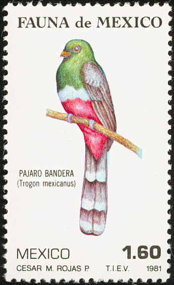 Mountain Trogon (Trogon mexicanus) - Wiki; Image ONLY