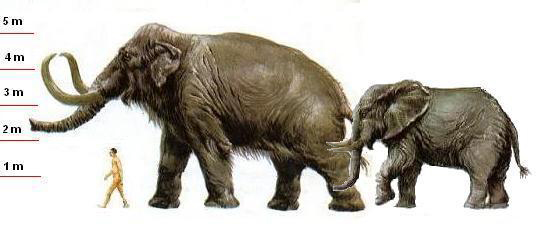 Songhua River Mammoth (Mammuthus - 52.4KB