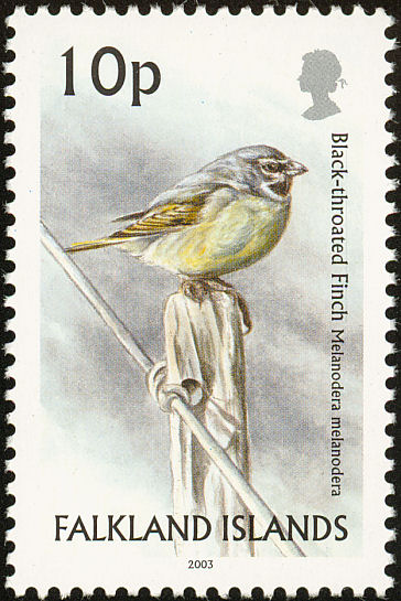 Canary-winged Finch (Melanodera melanodera) - Wiki; Image ONLY