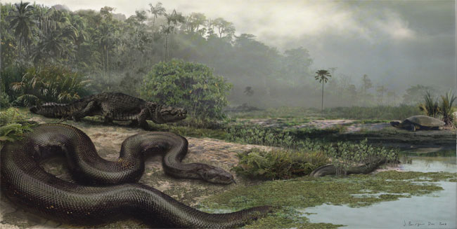 Ancient Snake Was As Long As a Bus [LiveScience 2009-02-04]; Image ONLY