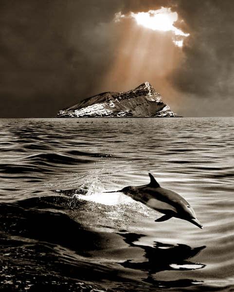 Delfin Saltarín - long-beaked common dolphin (Delphinus capensis).jpg