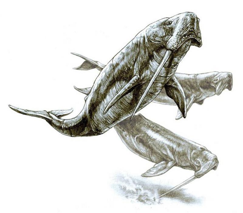Odobenocetops.jpg