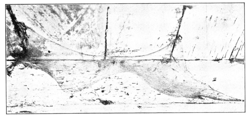 barn funnel weaver, domestic house spider (Tegenaria ...
