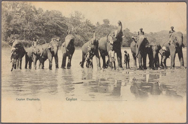 Ceylon elephants (NYPL Hades-2359911-4044676).jpg
