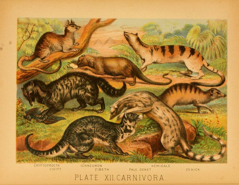 The animal kingdom (Plate XII) (6129694505).jpg