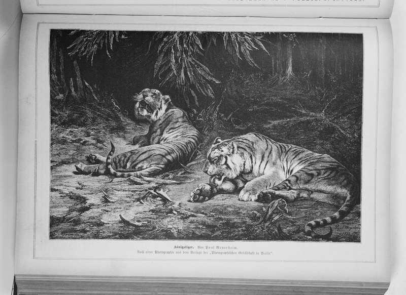 Die Gartenlaube (1880) 385.jpg