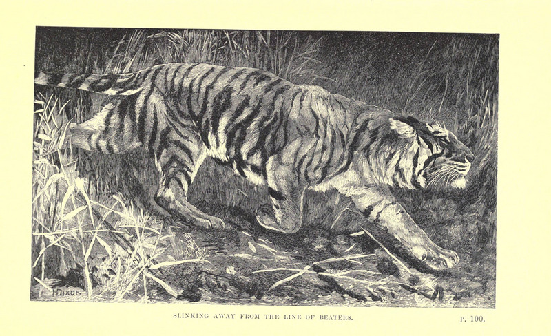 Wild beasts and their ways (Plate 6) (6505682005).jpg