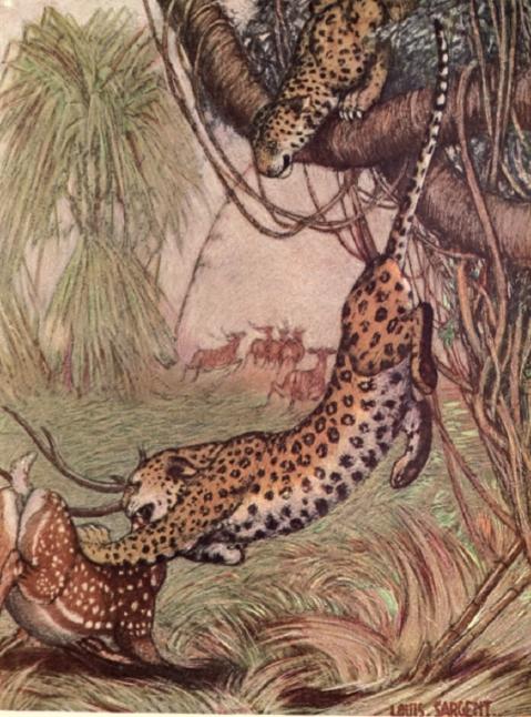 Leopard.deer.png