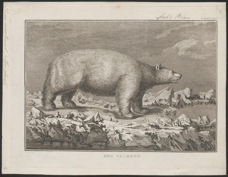 Ursus maritimus - 1700-1880 - Print - Iconographia Zoologica - Special Collections University of Amsterdam - UBA01 IZ22600081.jpg