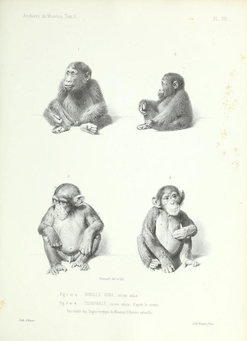 Archives du Muséum d'Histoire Naturelle, Paris (19930229848).jpg