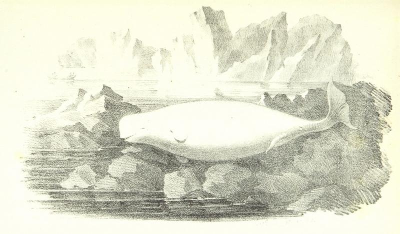 BERKH(1821) p493.jpg