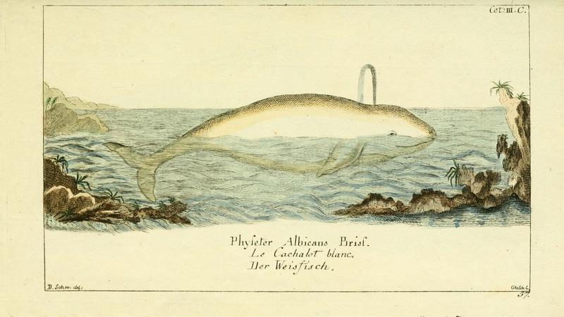 Gemeinnüzzige Naturgeschichte des Thierreichs (Plate 57) (6008530465).jpg