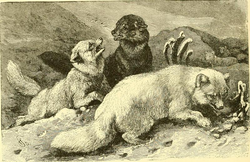 Hunting and trapping stories; a book for boys (1903) (14595818099).jpg