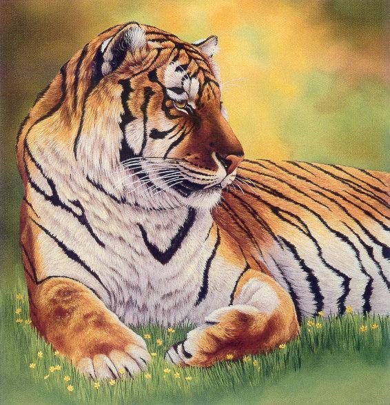 lj Linda A Poynter Tiger.jpg