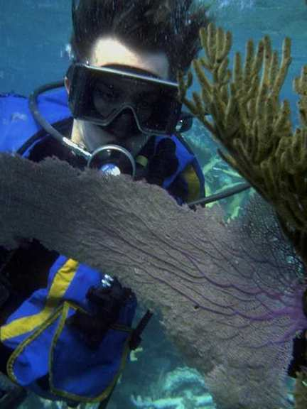 Sea Fan; Image ONLY