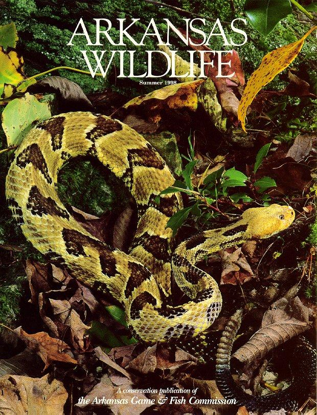 Arkansas Wildlife Summer 1998 - Timber Rattlesnake <!-- 검정방울뱀 -->; Image ONLY