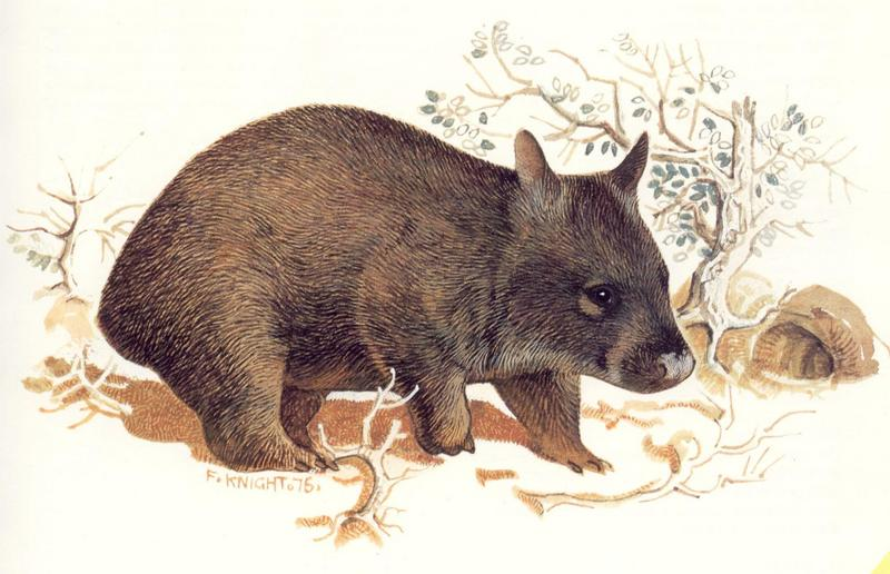 [Animal Painting] Northern Hairy-nosed Wombat {!--북방콧등털웜뱃-->; DISPLAY FULL IMAGE.