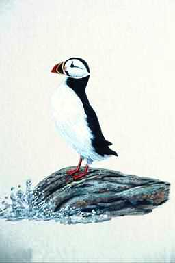 [Animal Art] Atlantic Puffin (Fratercula arctica) <!--대서양퍼핀, 퍼핀-->; Image ONLY