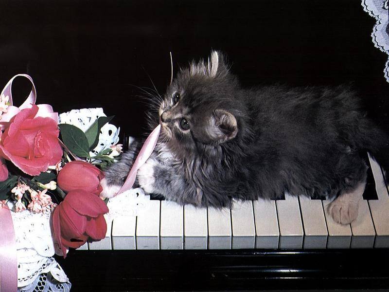 Ouriel - Chat - Kitten<!--새끼/아기 고양이--> on the piano; DISPLAY FULL IMAGE.