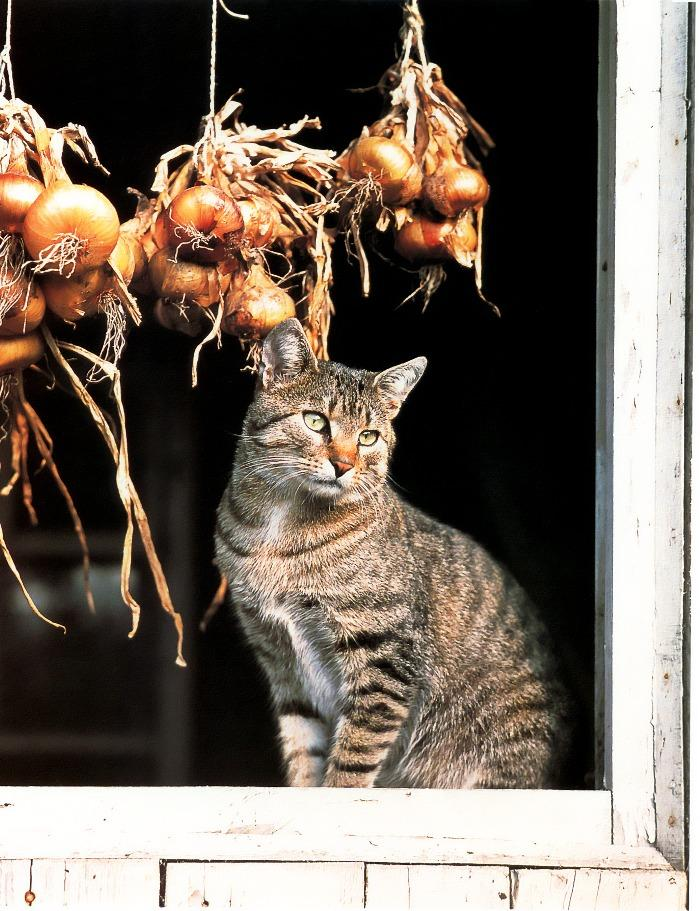 domestic cat and onions image only powered by articlems from