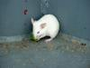small White Mouse (Daejeon Zooland)