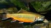 Water Life - Brook Trout (Salvelinus fontinalis).jpg (1/1)