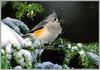 [Richardson Scan] Snaps'n Shots - Day Richard - Tufted Titmouse
