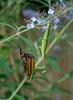 Chinese Mantid (Tenodera aridifolia), Viceroy butterfly (Limenitis archippus)