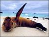 Tackling smelly sea lion problem  [BBC 2005-12-30 15:40]