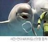 ...Beluga Whale 'Aliya' Learns to Blow Bubble Rings at Japanese Aquarium [UnderwaterTimes 2006-02-2