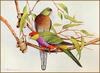 [Eric Shepherd's Beautiful Australian Birds Calendar 2003] Red-Capped Parrot