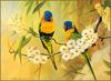 [Eric Shepherd's Beautiful Australian Birds Calendar 2003] Rainbow Lorikeet