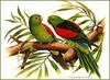 [Eric Shepherd's Beautiful Australian Birds Calendar 2002] Red-Winged Parrot